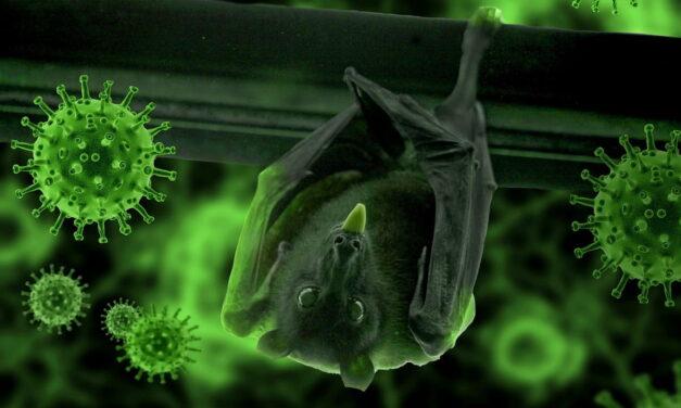 Virus Covid-19: i suoi effetti sulla vita di tutti i giorni